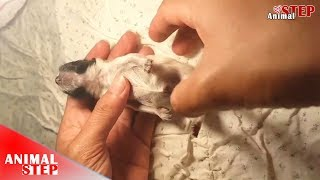 CPR for Newborn Puppy to Breathe Again