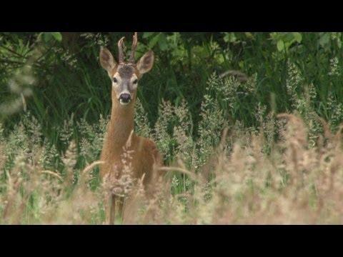 Long grass bucks, short grass foxes