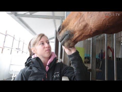 Fertagil le stimulant de cheval