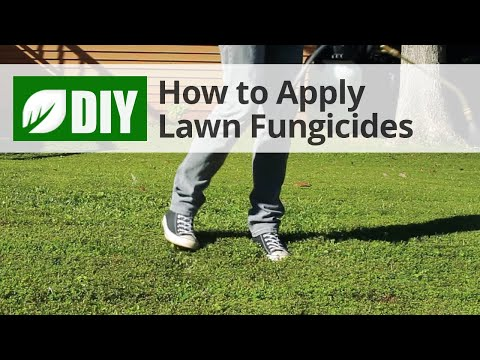 Video How to Use Lawn Fungicides For A Lawn Fungus Treatment