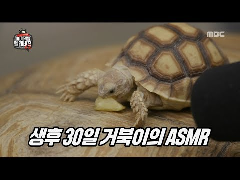 [HOT] watch sea turtles eat apples, 마이 리틀 텔레비전 V2 20190719