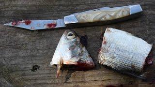 8 best catfish baits - Catch catfish - Blue, flathead and channel catfish