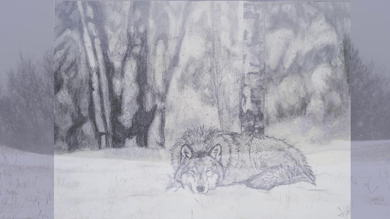 Loup endormi