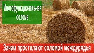 Выращивание клубники в Крыму.Зачем соломой простилают междурядья Клубники
