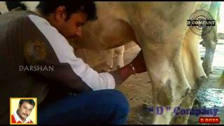 CHALLENGING STAR DARSHAN IN HIS FARM HOUSE...!!!