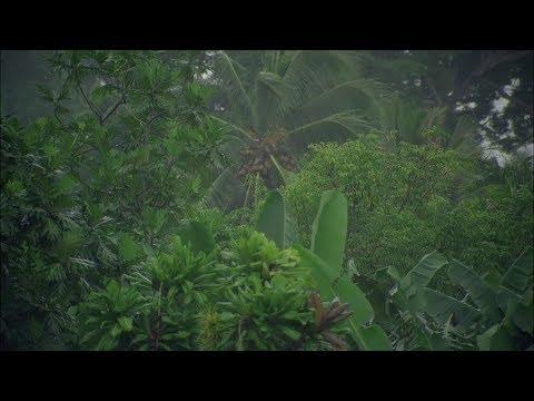 Regen im Regenwald  - Unwetter in den Tropen zum Einschlafen und Entspannen