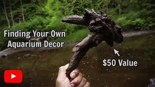 12 Rules For Collecting Aquarium Driftwood