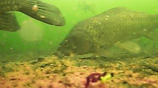 Какую взять камеру для зимней рыбалки