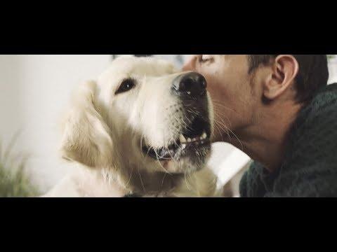 Imagen del vídeo Una historia sobre la confianza