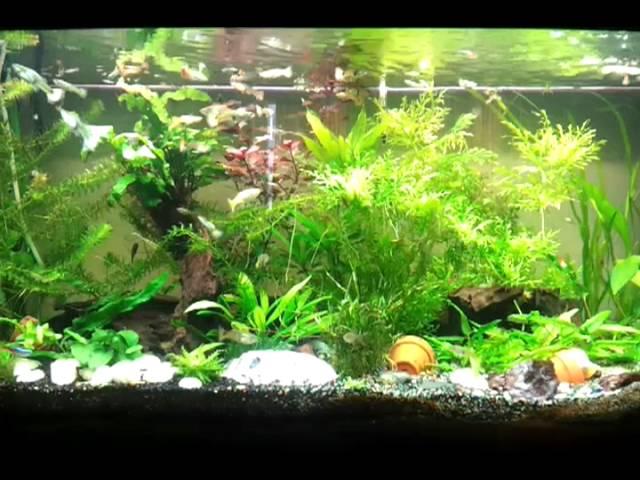 Mon aquarium 240l .guppy neon ancitrus coridoras..