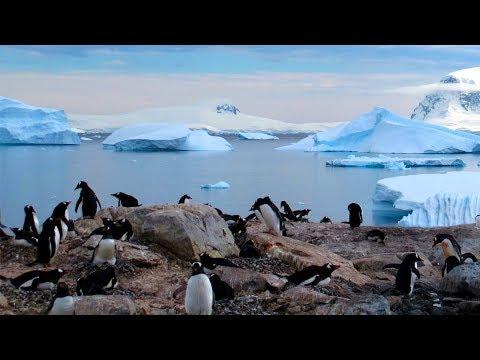 南極企鵝冰川 法國龐洛豪華郵輪 極地探索18日 USH18A