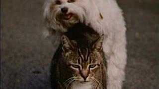 George Carlin   Pets (Subtitulado)