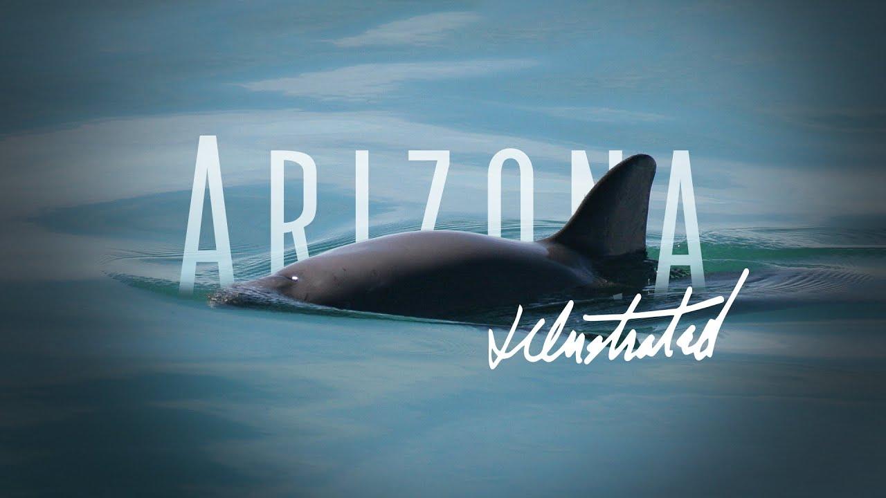 An Arizona Illustrated Special - La Vaquita