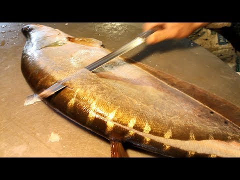 Big Clown Knifefish Slicing | Chitol Fish Cutting | Big Fish Cutting in Fish Market