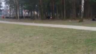 preview picture of video 'Łódzkie dziki 2'