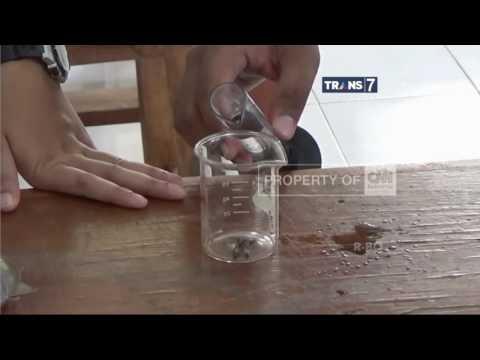 Video Temuan Obat Diare dari Lalat