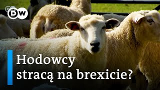 Brexit. Ciężkie czasy dla hodowców i rolników