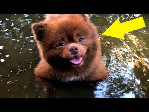 Züchter gab Hund ins Tierheim weil er zu dick war, jetzt ist er ein Internetstar!