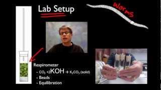 AP Biology Lab 5: Cellular Respiration