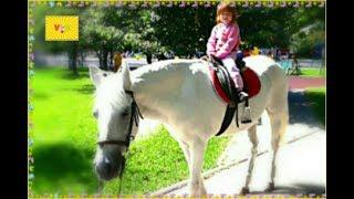 Верхом на лошадке. Дети катаются на лошади в парке.
