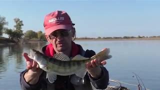 Рыбалка на реке кигач астраханская область