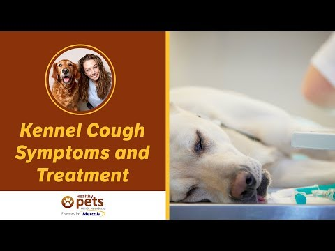 Video Kennel Cough Symptoms and Treatment