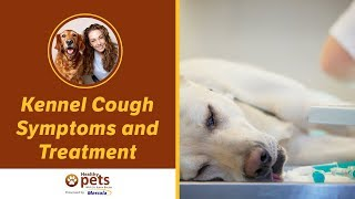 Kennel Cough Symptoms and Treatment