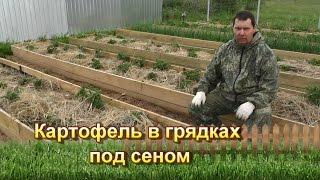 Посадка картофеля под солому: главные правила