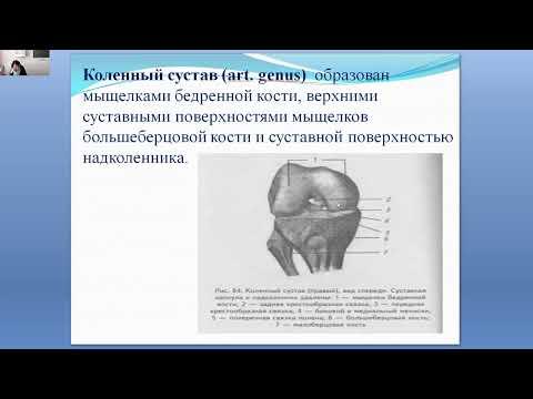Durere de tracțiune în articulația șoldului