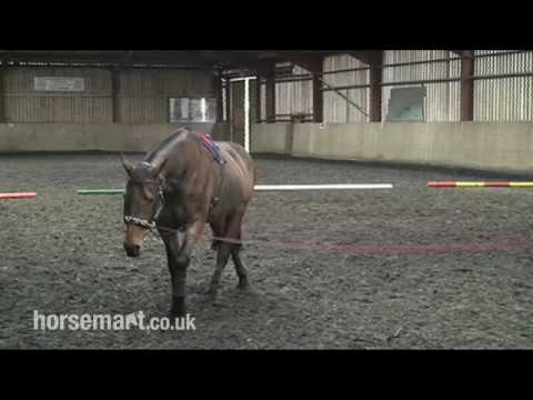 How to Lunge a Horse with a Chambon