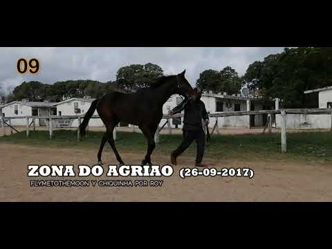 Lote ZONA DO AGRIAO (BRZ)