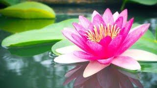 Relaxing Music, Reiki Healing Music, Zen Music, Meditation, Healing, Calm Music, Yoga, Sleep,☯1928