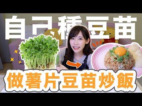 自己種豆苗做成薯片豆苗炒飯吧 | 安啾