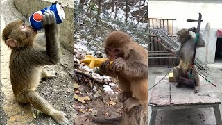 🐒🐒🐒Tik Tok Funny Videos Of Monkey Eating Douyin China Animal Videos