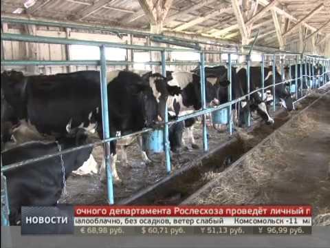 Льготы сельхозпроизводителям. Новости. GuberniaTV.
