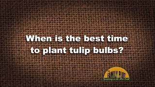 Q&A - When is the best time to plant tulip bulbs?