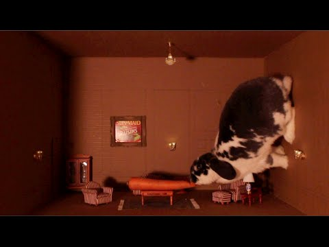 """Wallace the Rabbit Recreates Fred Astaire's """"Ceiling Dance"""""""