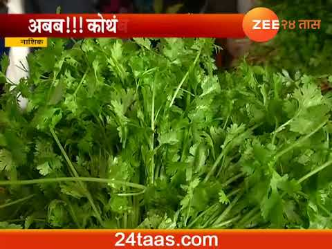Nashik Good Rate Get To Coriander