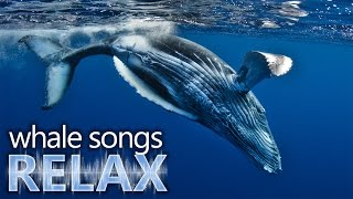 Humpback Whale Songs Of The Ocean Deep Sleep Music Relaxation-holistic Hypno
