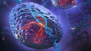 CRISPR Technology   Genetic Engineering   Full Biotechnology Documentary