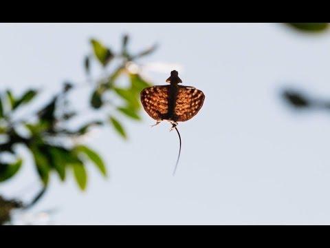 סרטוני טבע של ה-BBC: חדרון דרקון דואה