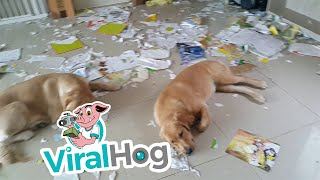 Somebody's in Trouble || ViralHog | Kholo.pk
