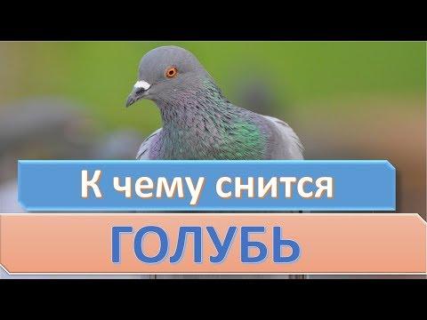 К чему снится голубь   СОННИК