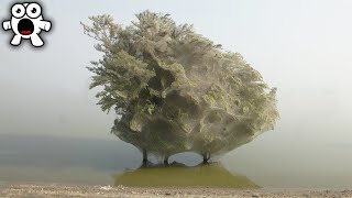 Why You'd Run Away From This Ghostly Infested Tree