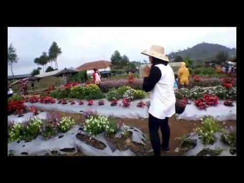 Video Video Eksotisme Taman Begonia Lembang Bandung