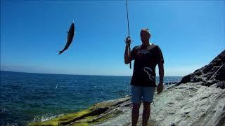 Рыбалка в июле с берега на мадейре