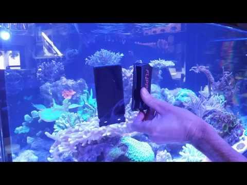 Flipper aquarium cleaner demonstration