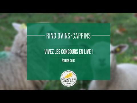 Voir la vidéo : Ring Ovins et Caprins du 27 février 2017