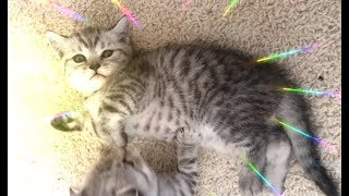 Котята!Несколько минут из Жизни Мамы и Котят!