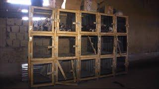 В каких условиях находятся изолированные животные в Шымкенте